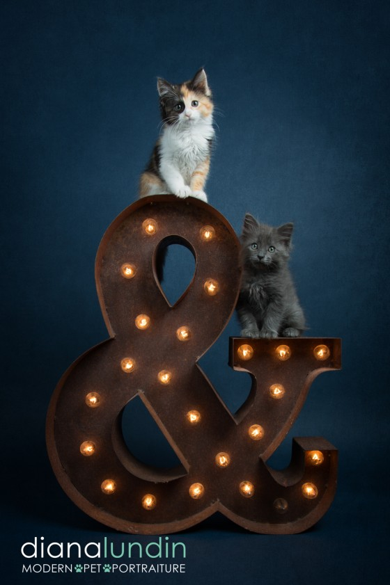Photo 22 by Diana Lundin for Pet Photography