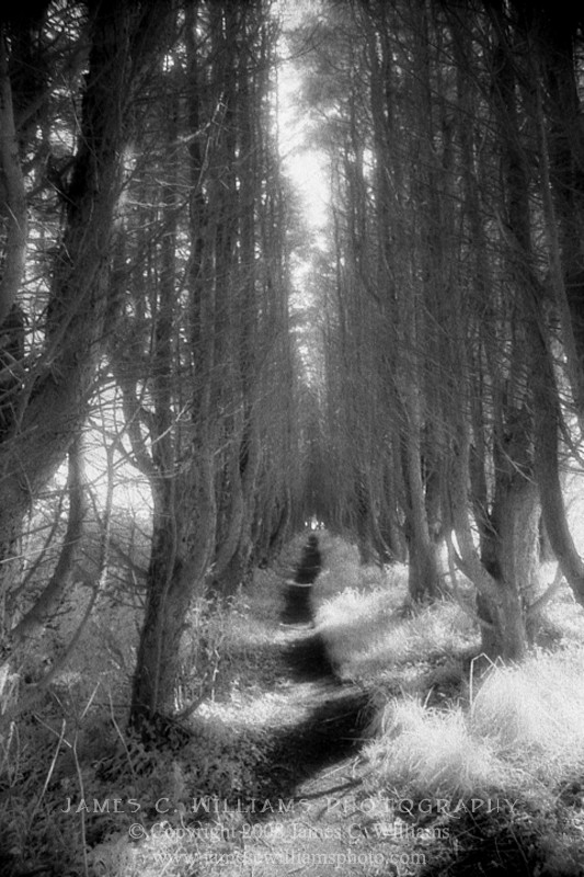 Path To Madron Well Madron, Cornwall, England Infrared Film, 2009