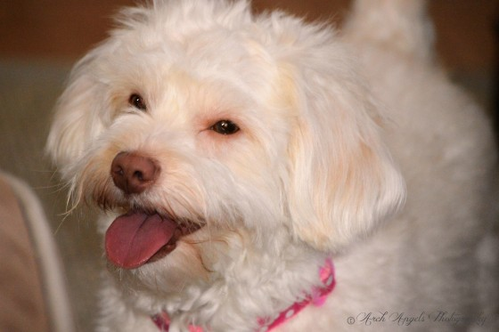 Photo 2 by ArchAngels Photography for Pets of all types