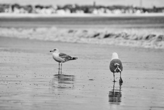Seagull at Revere Beach