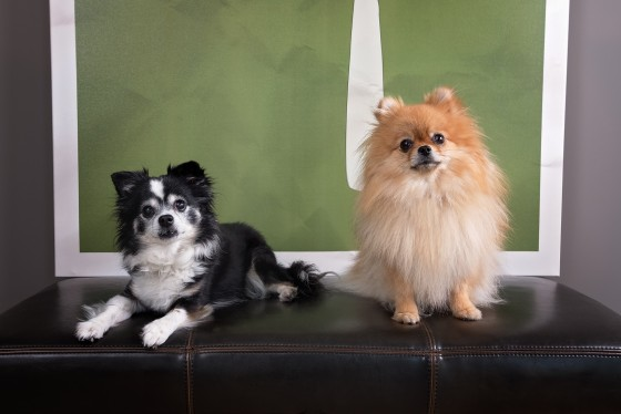 Photo 16 by Diana Lundin for Pet Photography