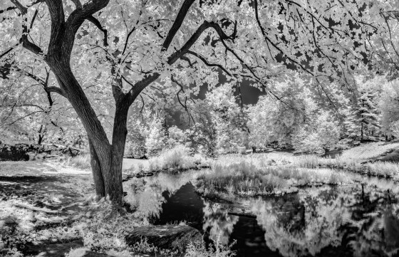 Photo 9 by Oleg March for Infrared Landscapes