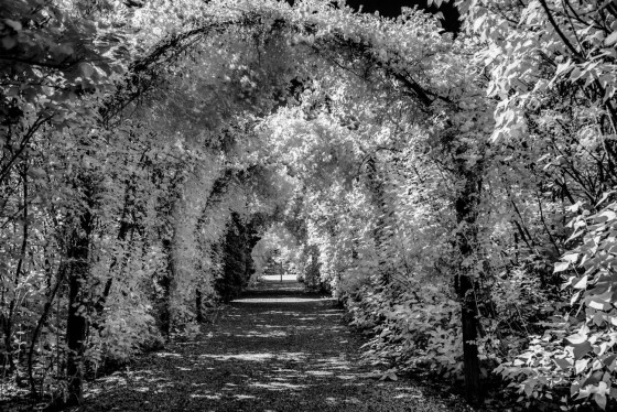 Photo 7 by Oleg March for Infrared Landscapes