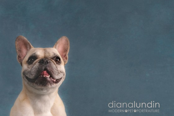 Photo 20 by Diana Lundin for Pet Photography