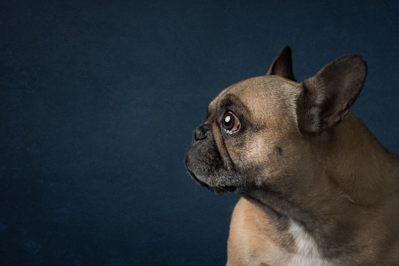 Photo 8 by Diana Lundin for Pet Photography