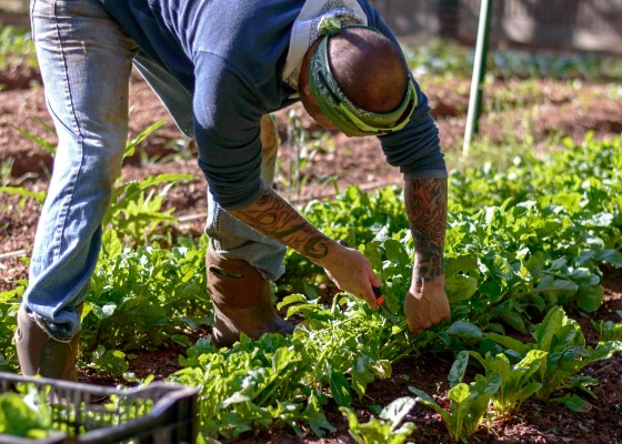 Photo 1 by Atlanta Food Photographer for Farm to Table