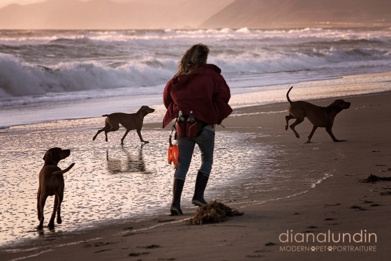 Photo 26 by Diana Lundin for Pet Photography