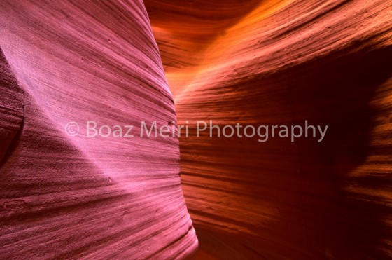 Photo 31 by Boaz Meiri for Nature Photography