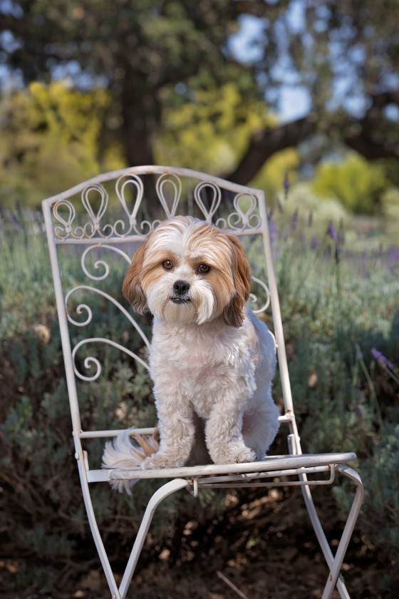 Photo 4 by Diana Lundin for Pet Photography