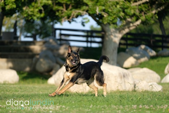 Photo 25 by Diana Lundin for Pet Photography