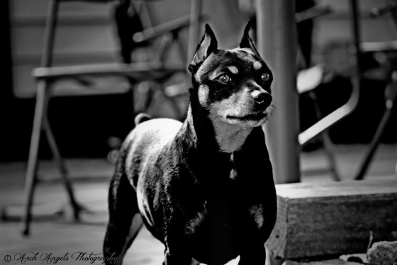 Photo 23 by ArchAngels Photography for Pets of all types