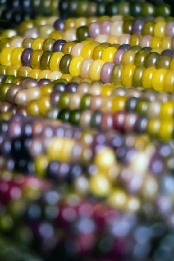 Native Corn