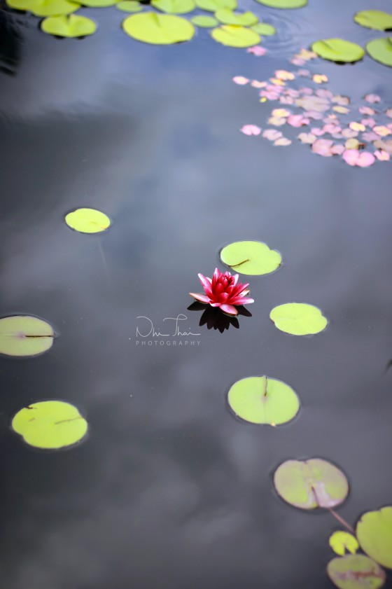Photo 0 by Nhi Thai for Nature Photography